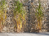 China Reed and Gabion Wall